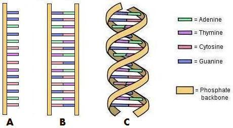 DNA and Genetics 01